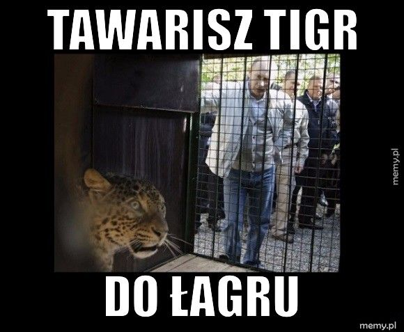 Tawarisz Tigr Do łagru