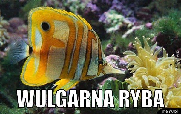 wulgarna ryba