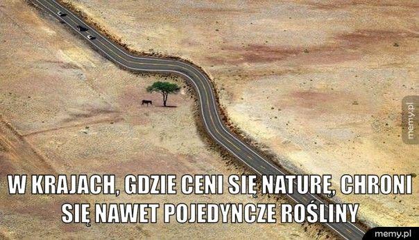 W krajach, gdzie ceni się naturę, chroni się nawet pojedyncze ro