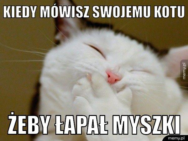 Kiedy mówisz swojemu kotu żeby łapał myszki