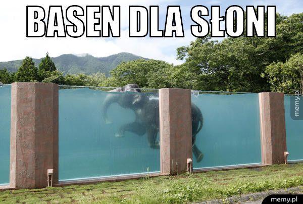 Basen dla słoni