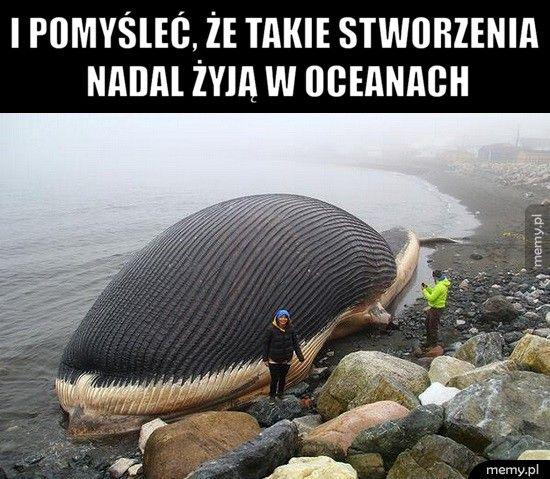 I pomyśleć, że takie stworzenia nadal żyją w oceanach