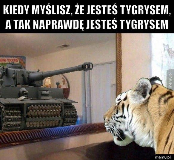 Kiedy myślisz, że jesteś tygrysem, a tak naprawdę jesteś tygryse