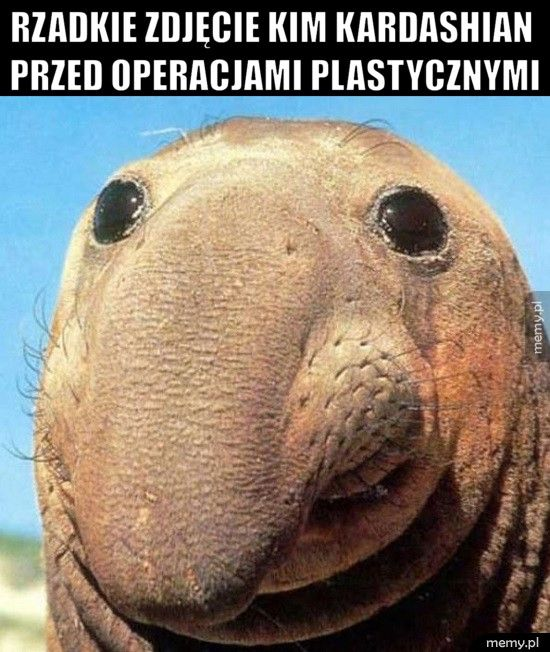 Rzadkie zdjęcie Kim Kardashian przed operacjami plastycznymi