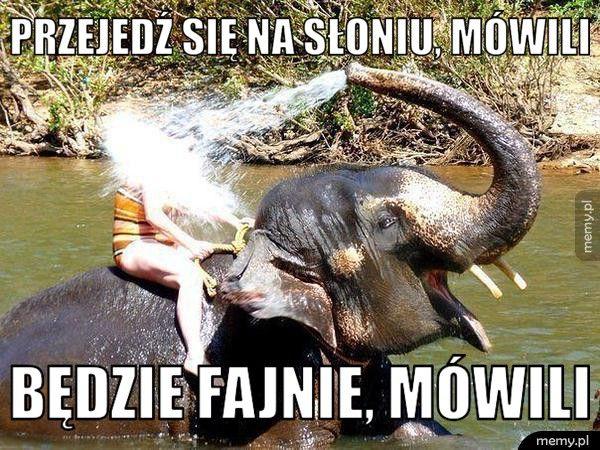 Przejedź się na słoniu, mówili Będzie fajnie, mówili