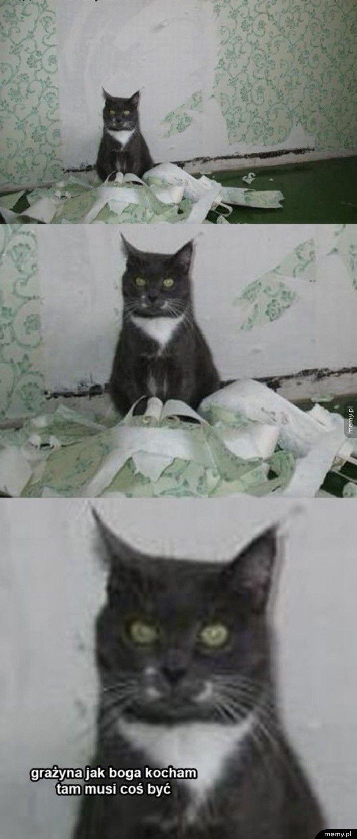 Kot poszukiwacz