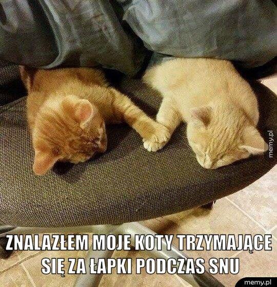 Znalazłem moje koty trzymające się za łapki podczas snu