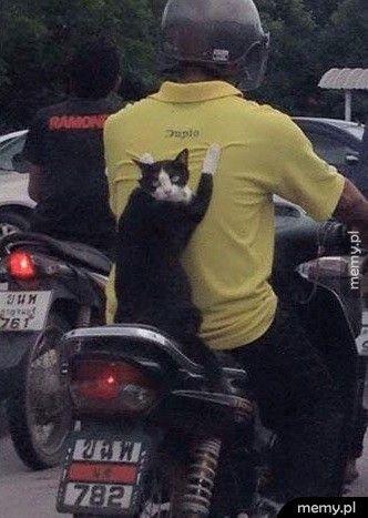 Andrzej, gazu! Psy siedzą nam na ogonie!