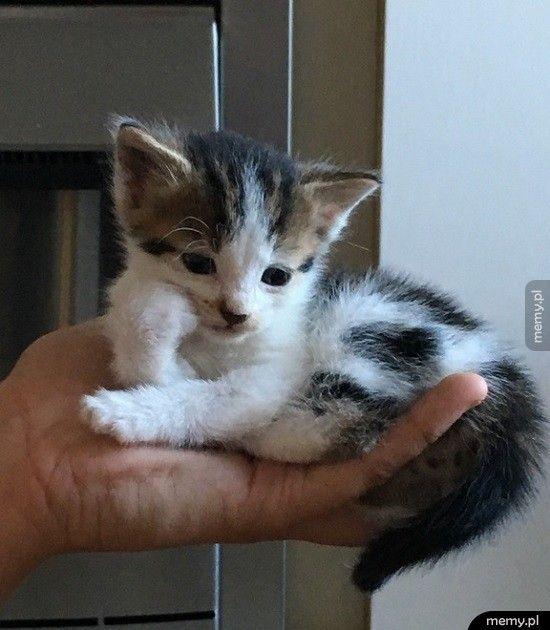 Kotek ma 4 tygodnie a już ma dość życia: