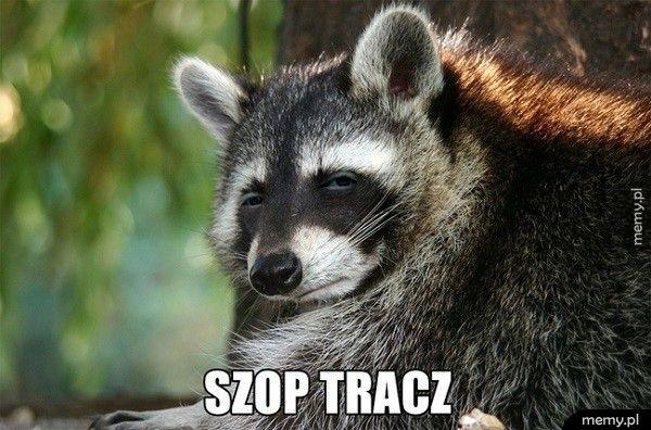 Szop Tracz