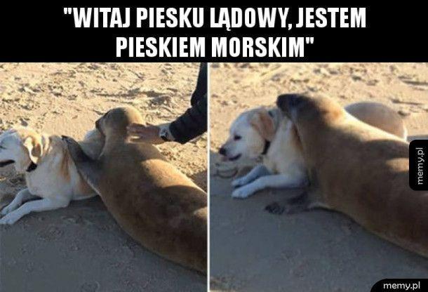 Pieski dwa