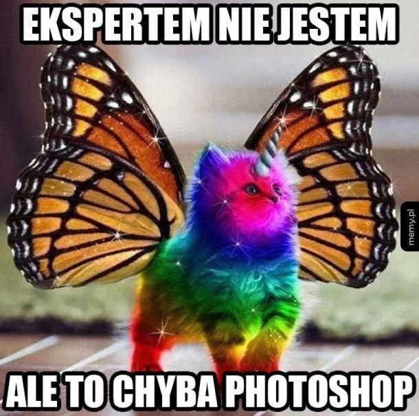 Photokot