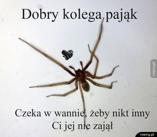 Dobry kolega pająk