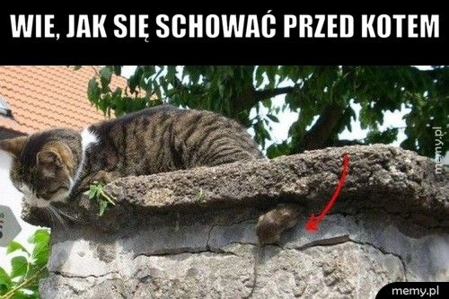 Wie, jak się schować przed kotem