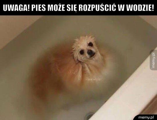 Uwaga! Pies może się rozpuścić w wodzie!