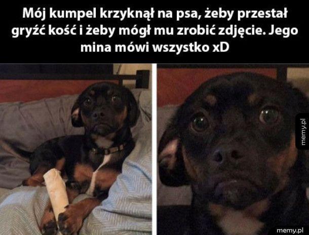 Smutny pies
