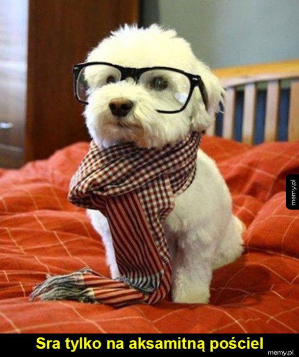 Kolejny hipster