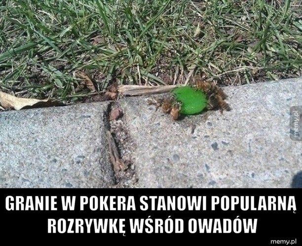 Poker owadów