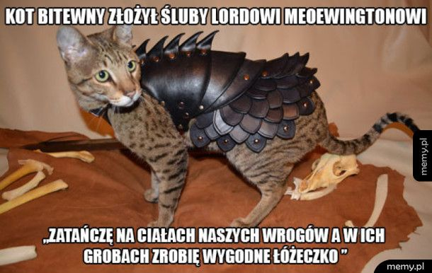 Kot bitewny