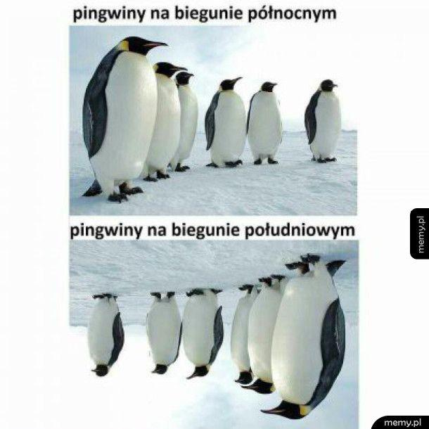 Pingwiny na biegunie północnym i na biegunie południowym
