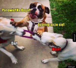 Psia kłótnia