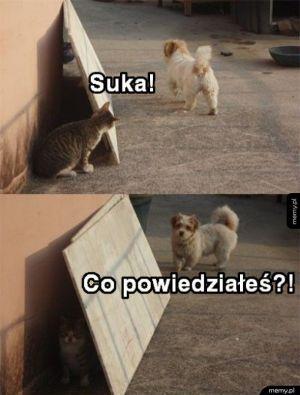 Suka!