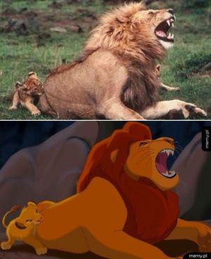 Król lew w prawdziwym życiu