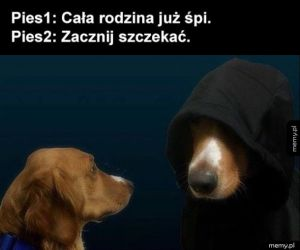 Ten zły pies