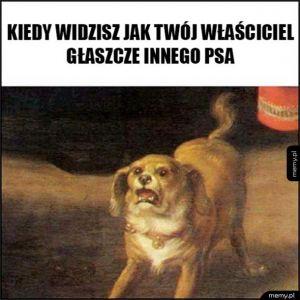 Pies nie wie co zrobić