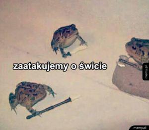 Zorganizowany gang żab i ropuch