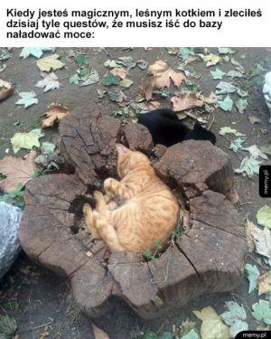 Magiczny kotek