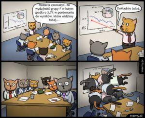 Raport z kotami