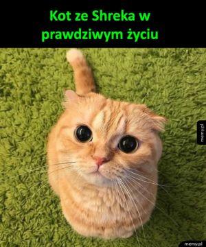 Kocie spojrzenie