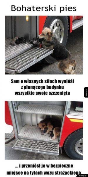Bohaterski pies