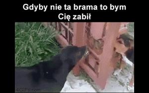 Typowy kozak