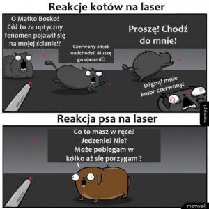 Reakcja kota i psa na laser