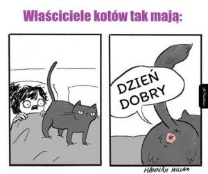 Właściciele kotów rozumieją