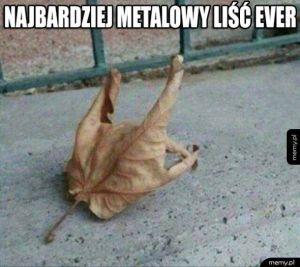 Widziałeś kiedyś liścia metalowca?