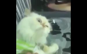 Z tym kotem jest coś nie tak