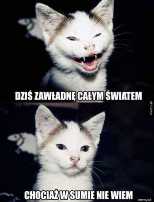 Kotek nie wie