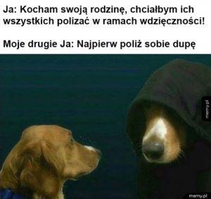 Problemy typowego psa