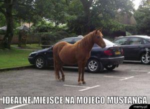 Mustanga