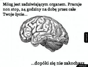 Mózg jest niesamowity