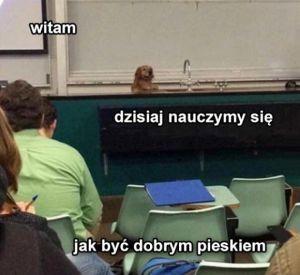Profesor pieseł