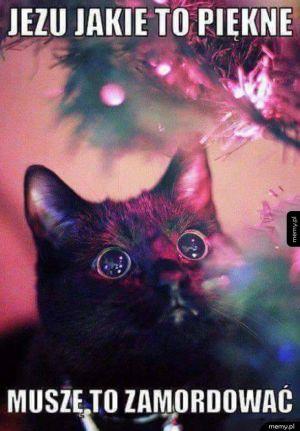 Każdy kot na święta
