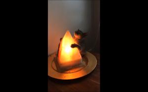 Kotek grzeje się przy lampie