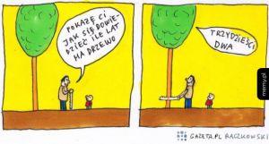 Jak się dowiedzieć ile lat ma drzewo?