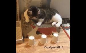 Kto powiedział, że koty są głupie