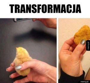 Kurczak transformował