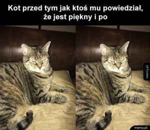 Kotek